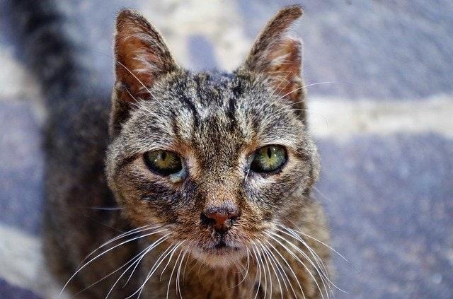 Immunsystem einer Katze stärken
