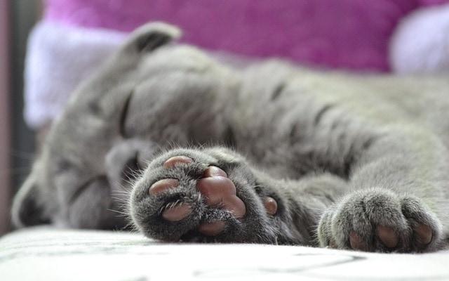 Trockene Pfoten bei Katzen
