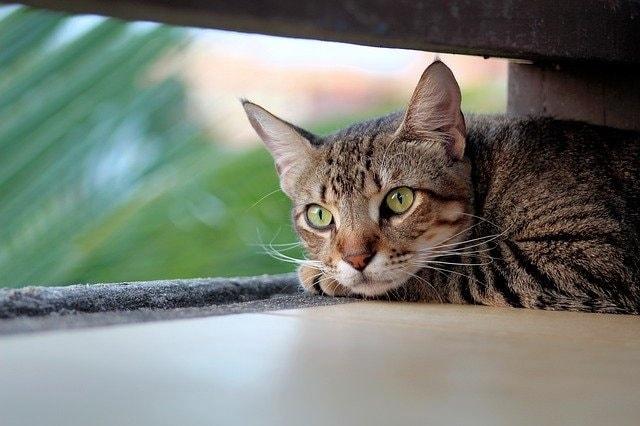 Katzen Blasenentzündung