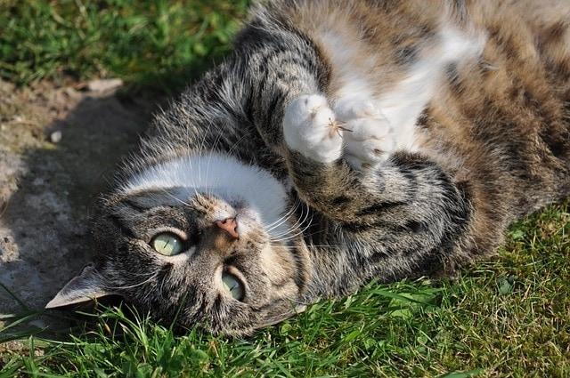 Ist meine Katze übergewichtig? Daran sehen Sie es!