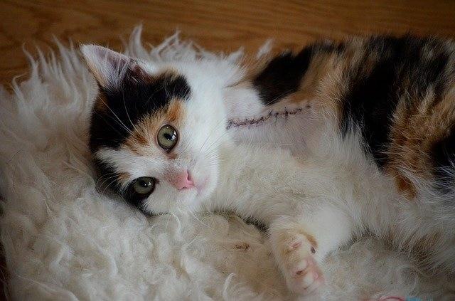 Katze pflegen nach OP